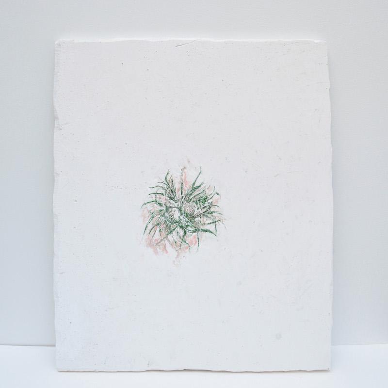 Solanne Bernard, Shy Blooms1 - LEMOW