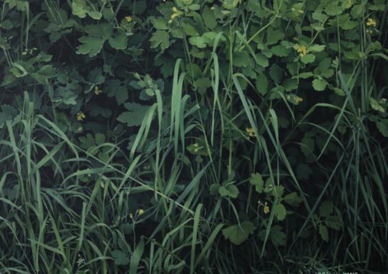 [EXPOSITION] 15/09 ▷ 07/10 – Sémine YANG – Vie Silencieuse – Galerie BS – PARIS