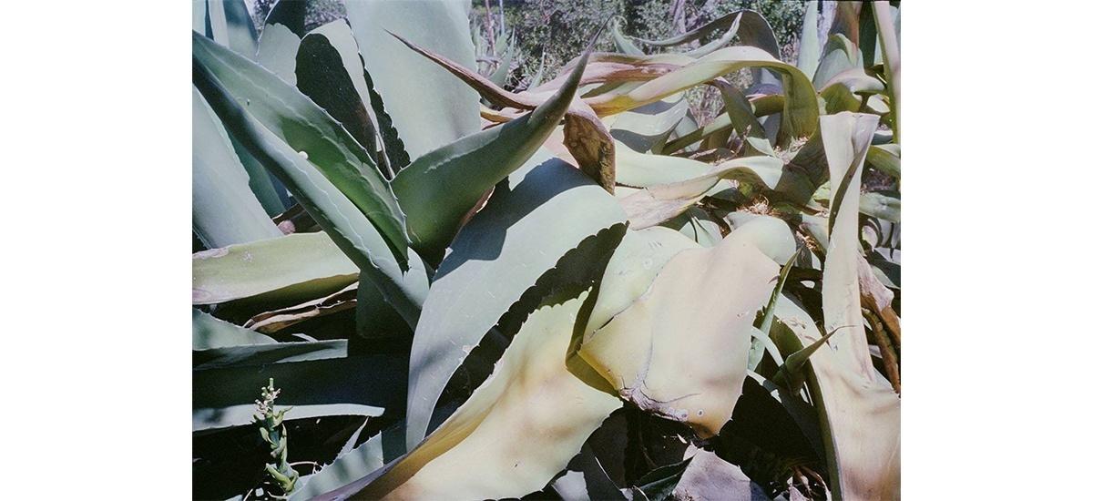 07/04▷16/06 – JEUNE. – CACN – CENTRE D'ART CONTEMPORAIN DE NÎMES