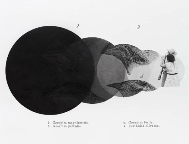 Daniel Otero-Torres_Geospiza_galerie anne-sarah bénichou