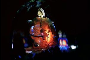 Nieto_Dévorer l'Univers_excrémenter une fourmi_Galerie Da-End_Paris
