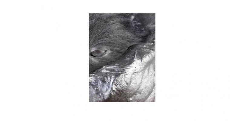 Gilbert Coqalane – Animalité / Futuring – 14/05 au 05/07 – Le Préau – espace d'art et de création UL / ESPÉ, Maxéville