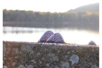 De l'île au monde : créer à Vassivière – 06/07 au 03/11 – Centre international d'art et du paysage, Île de Vassivière, Beaumont-du-Lac