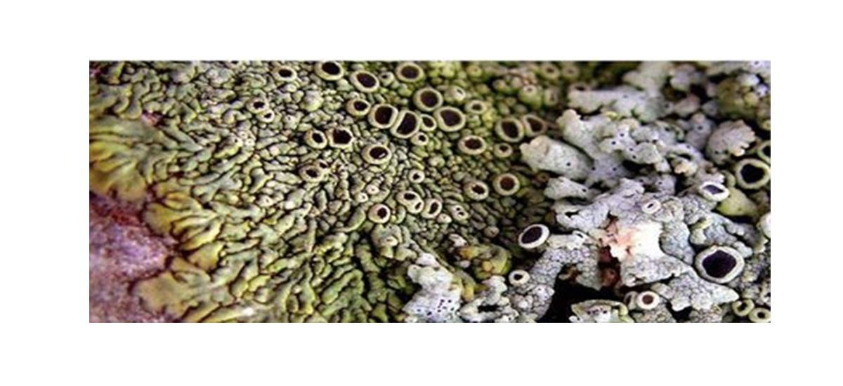 Journée d'étude «Végéter. Une écologie des formes» – 12/06 – 09H à 17H30 – Université Toulouse – Jean Jaurès