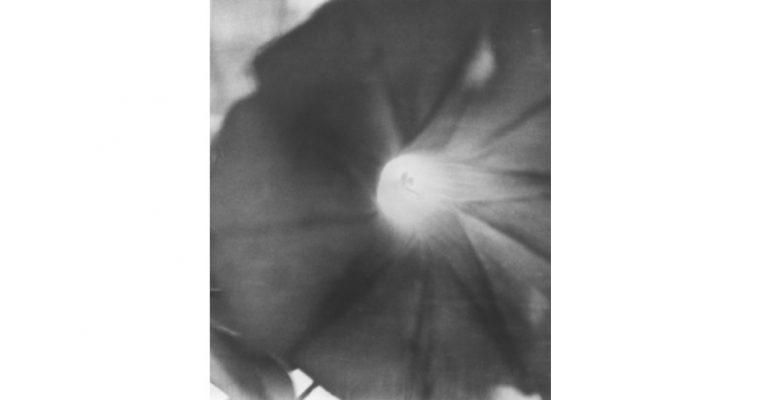 Jochen Lempert – Jardin d'hiver – 23/01 au 27/06 – Centre d'art contemporain d'Ivry – le Crédac