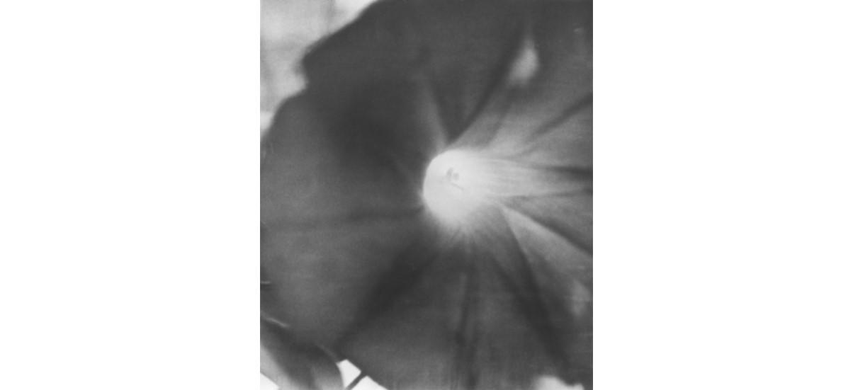 Jochen Lempert – Jardin d'hiver – 23/01 au 29/03 – Centre d'art contemporain d'Ivry – le Crédac