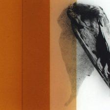 Pia Rondé & Fabien Saleil – Cryptide – 07/03 au 27/06 –  Galerie Valeria Cetraro, Paris
