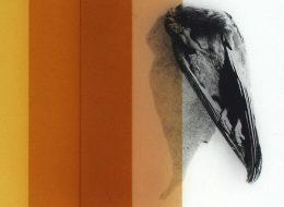 Pia Rondé & Fabien Saleil – Cryptide – 07/03 au 18/04 –  Galerie Valeria Cetraro, Paris