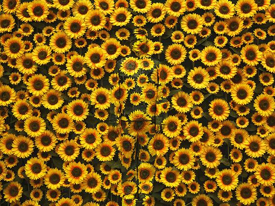 [PHOTOGRAPHIE] 16.06 ▷ 10.09 – FESTIVAL PORTRAIT(S) – VICHY