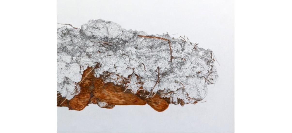 Laura Ben Haïba – Naturalia, artificialia et caetera… – 13/09 au 19/10 – L'Angle espace d'art contemporain du Pays Rochois, La Roche Sur Foron