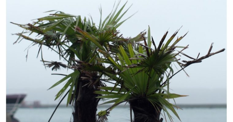 Face à la mer – 12/06 au 12/12 – Passerelle Centre d'art contemporain Brest